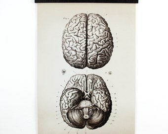 Anatomy Brains Pull Down Chart - Vintage Print Reproduction Canvas Wall Hanging - Biology Educational Diagram Poster - CP102CV