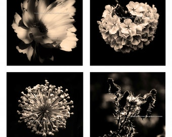 OFFICE DECOR, Set of 4 Sepia Photos, Color Flower Photography Set, Nature, 12 x 12 inch Ready for Pre-matted Ikea Ribba 20x20 inch Frame.
