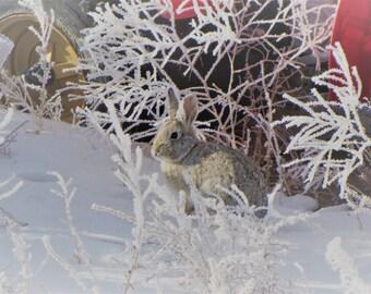 Winter Rabbit (Unmatted)
