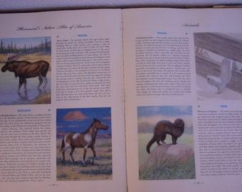 Atlas/ Hammond's Nature Atlas of America/Animals/Birds/Fish/Maps/Ephemera/Suppy/Craft Supply
