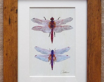 Dragonfly Picture Dragonfly Print Dragonfly Artwork Dragonflies Framed  - Dragonfly illustration of the Scarlet Darter and Violet Dropwing