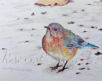 Original art bluebird- Snowy Bluebird- Colored pencil bluebird- Small bluebird art