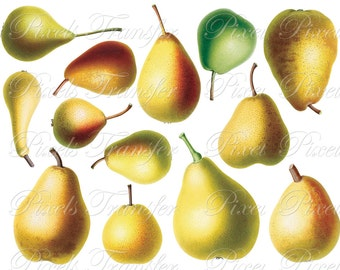 PEARS collage Instant download Digital Downloads, fruits botanical illustration, pear clipart SALE