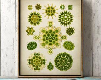 Green Marine microorganisms print, seal life print, ocean wall decor, marine biology study, beach home decor, geometrical forms