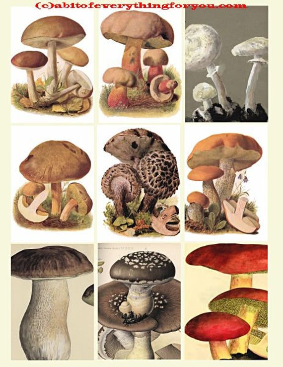 """vintage mushroom fungi plants collage sheet 2.5"""" x 3.5"""" inch clipart aceo images digital downloadable  botanical printables"""