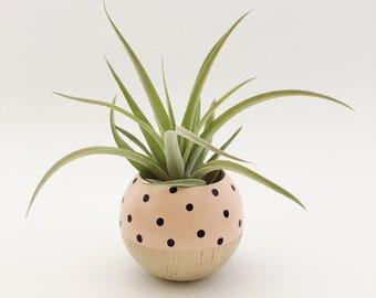 Sphere Succulent Air Plant Planter // Peach Dot