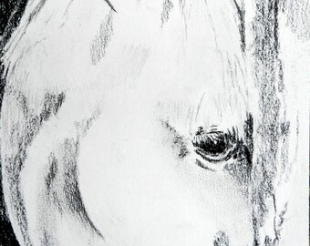 Horse Charcoal, 8.5x5.5, Original charcoal drawing
