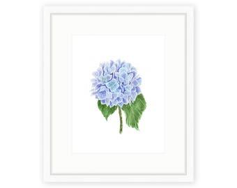 Hydrangea Print