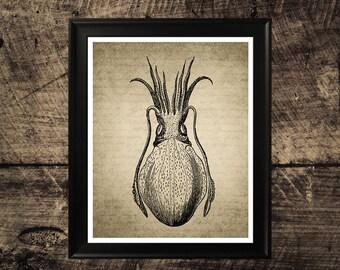 Vintage cuttlefish wall art, vintage fish print, printable cuttlefish, wall design, vintage home decor