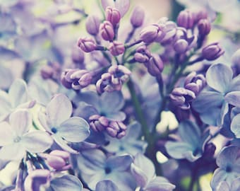 Botanical print, lilac photograph, pale purple wall art, lavender home decor, lilac flowers print, bedroom wall art - Scent of Lilac
