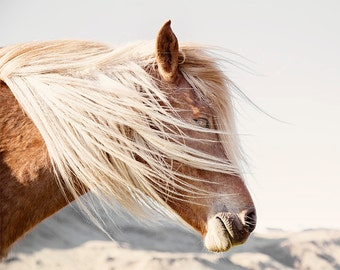 Icelandic Horse Photograph in Color | Mane blowing | PHYSICAL PRINT