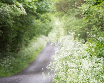 Irish Road Photography - Green Summer Pathway Fine Art Photograph - County Fermanagh - Northern Ireland