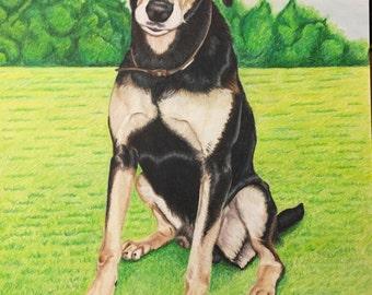 Custom portrait of pet in A3