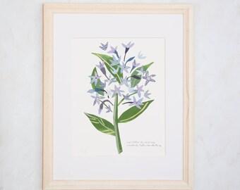 Art Print of Original Wildflower Collage- Eastern Bluestar