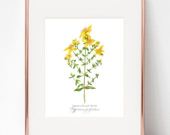 The Agony in the Garden, Christ's Bloody Sweat, Hypericum perforatum Print