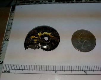 Pyritized ammonite fossil, 34.0x26.9mm baecp