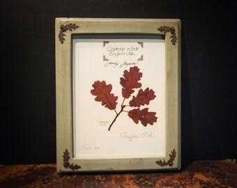 Framed English Oak Print