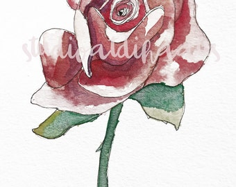 Rose Watercolor and Pen and Ink