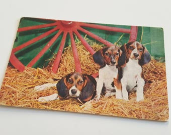 Vintage Foxhound puppy postcard - 1950's dog postcard, dog print, Foxhound gift, Foxhound gifts, Foxhound print, vintage dog, dog decor