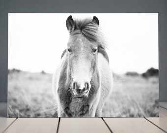 New Forest Pony | Horse Photograph | Equine Fine Art Print | Black & White Print | Wild Horse | Equine Wall Art | Home Decor Art