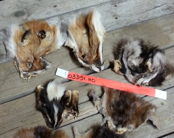 7 B Quality Faces-  Red Fox, Skunk, Muskrat, Raccoon Soft Tanned - Lot No. 03351HO