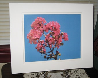 Matted, Pink, Crape Myrtle, Fine Art, Photography, Print, Chattanooga, TN, 8 x 10, Glossy, OOAK