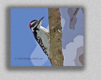 Hairy Woodpecker, Bird, Birding, Picoides villosus, Print, Bird Art