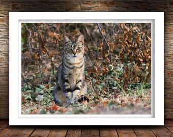 Sitting Cat Photo Print, Nature Photography, Kitten Art, Home Decor, Fine Art Photography Print