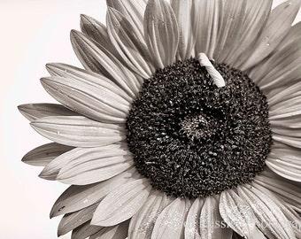 Sunflower 5, Photography, Floral, Photo, Botanical, Flower, Garden, Black and White, Fine Art, Home Decor, Wall Art, Housewarming Gift