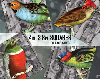 """Vintage Birds  Digital Collage Sheet 3.8"""" and 4 x 4 Inch Square C0017 for Gift Tags Coasters Magnets Scrapbooking JPG"""