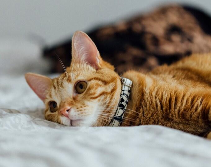 Glowing in the dark Skulls cat collar