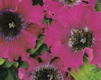 Purple Petunia  BORODOVAJA F1 seeds/annual flower seeds