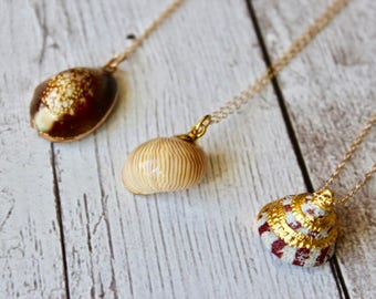 Real Shell in 24K Gold Necklace, 14K Gold Filled Chain, One Of A Kind, Gifts for Her, Dainty, Lightweight, Unique, Everyday, Ocean