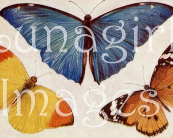 250 VINTAGE BUTTERFLIES, digital ephemera, Butterfly wings, Victorian art cards, antique prints, Butterfly Photos, woodland nature, DOWNLOAD