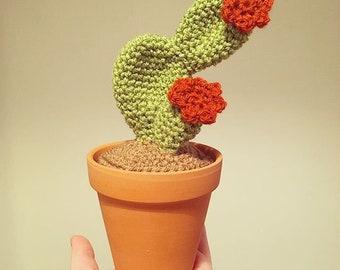 Crochet Cactus. Amigurumi Cactus.