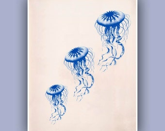 Jellyfish trio Print in blue,  Vintage medusa image print,  Nautical Decor, Nautical art,  Sea life Print, Coastal Living, Haeckel inspired