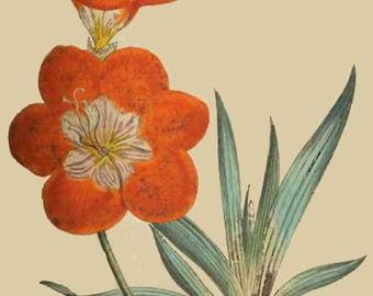 DIGITAL EDITION * Botanical Magazine 2: 108 Vintage Images