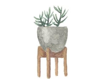 2018 Desktop Calendar - Succulents