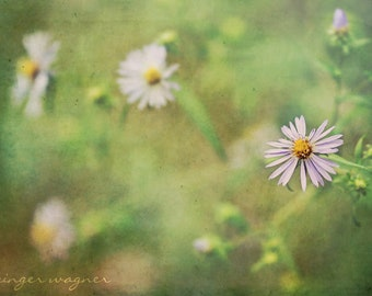 Flower Photography - Asters - fine art print - 5 x 7 - nature floral green purple peach lilac yellow home decor