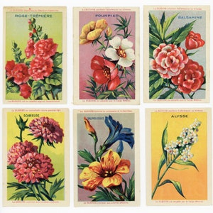 French Flower Cards - Vintage