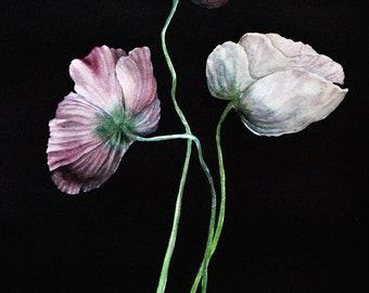 Poppies Three - Print