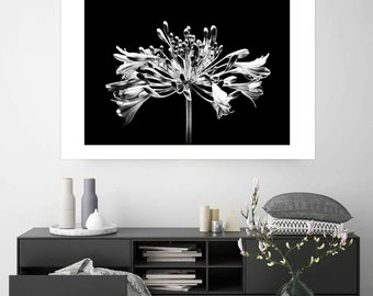 Large Agapanthus Print Bnw Flower Photograph Bnw Fine Art Photo Botanical Wall Art Bnw Nature Photograph Floral Art Decor Modern Minimal Art