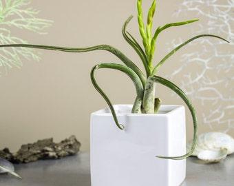 Square Planter White Cube Ceramic vase, gift mom, geometric plant pot, Modern Pottery, Handmade Succulent Air plant cactus desk decor