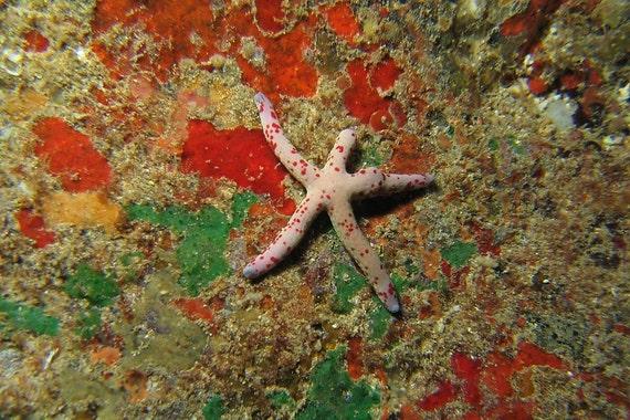 Starfish Decor ~ Starfish Art Nautical Home Decor Underwater Photography Print