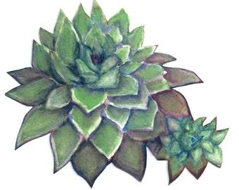 Watercolor Succulent Print 8 x 10