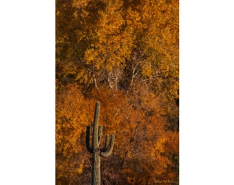 Photograph of an Arizona Saguaro in Autumn, printed on metal and ready to hang