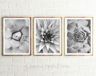 Black and White Cactus Prints, Set Of 3 Prints, Cacti, Succulent Print, Botanical Photo, Cactus Print, Wall Art, Cactus, Scandi, Australia