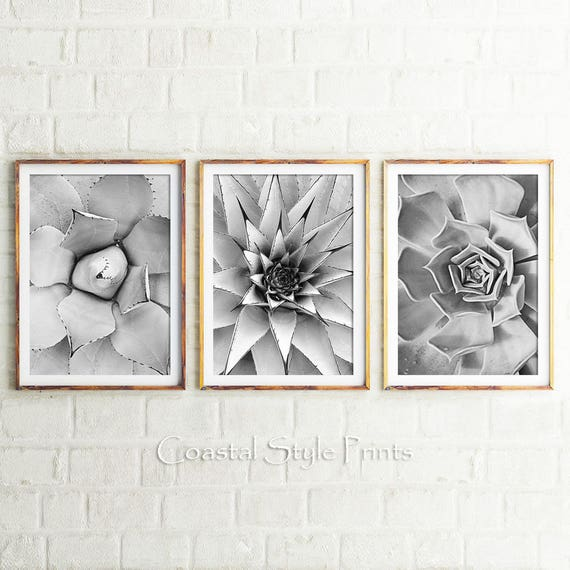 Black and white cactus prints set of 3 prints cacti