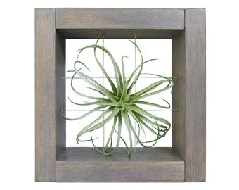 Air Plant Holder, Air Plant Display, Air Plant Frame, Wall Planter, Air Planter, Tillandsia Holder, Mini Planter, Air Plants, Indoor Planter