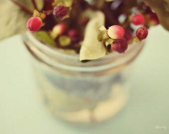 berries, red, winter, fine art photography